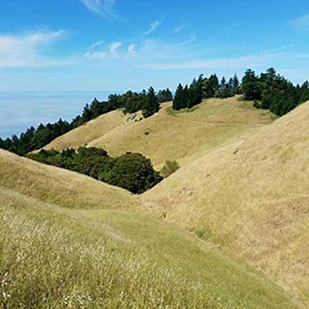 Grassland Communities