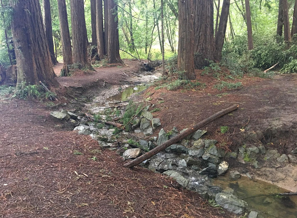 Creek running through a redwood forest, with bare, eroding banks