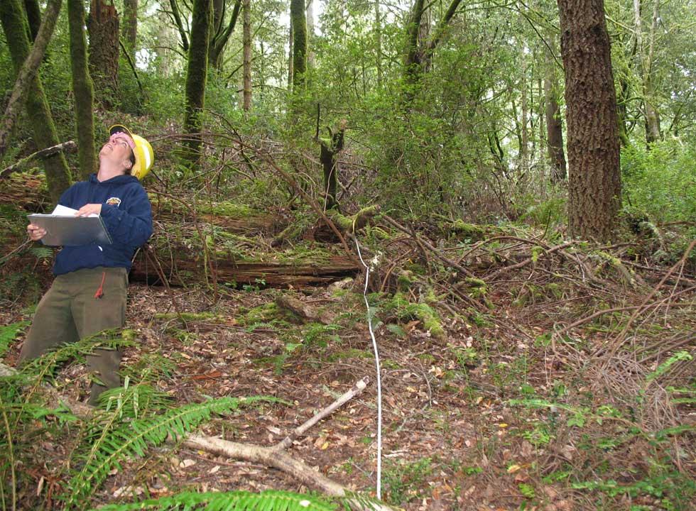 Forestry reseach work