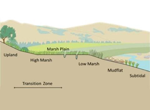 Diagram of a marsh